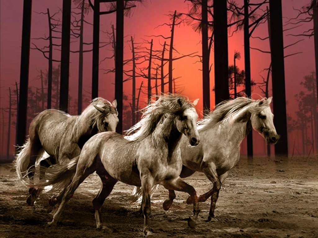 012 koně zvířata