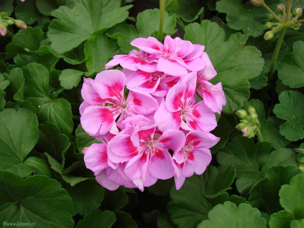 012 kytky kytičky flowers