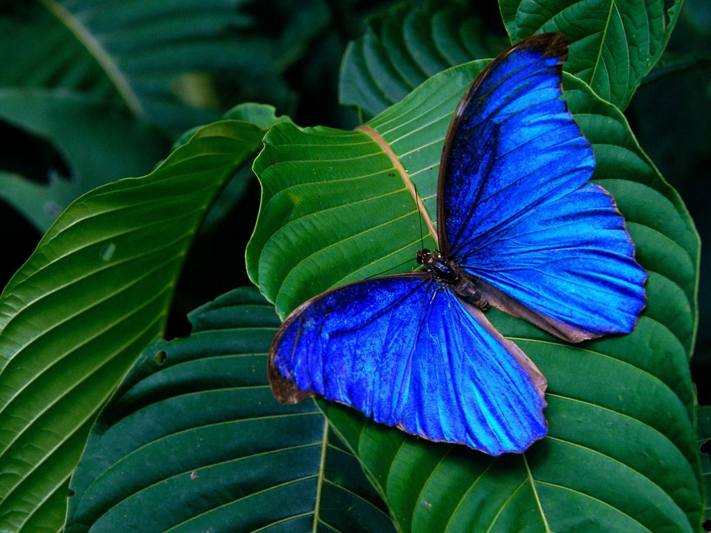 012 motýli - butterfly