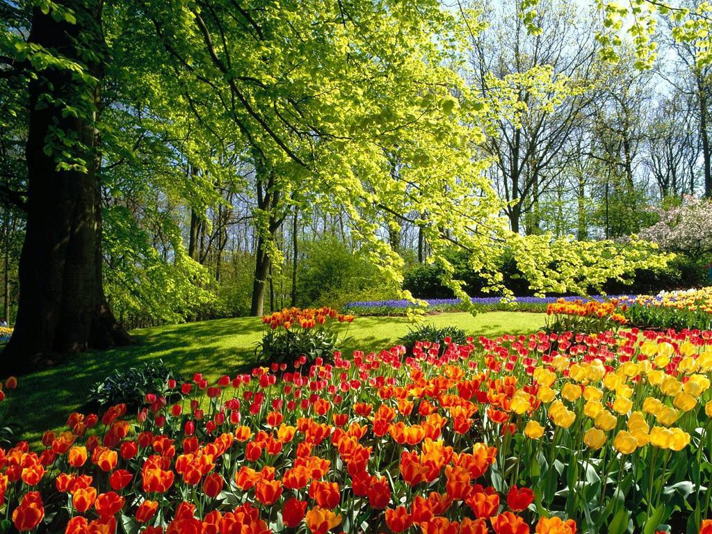 012 parky zahrady květiny