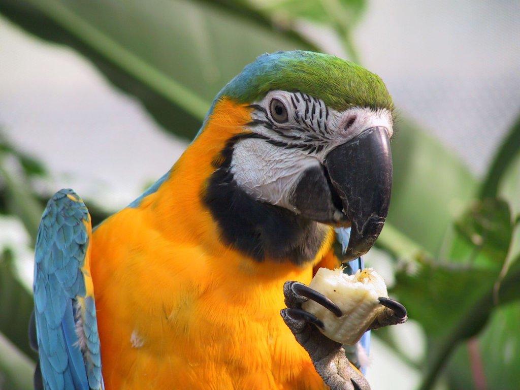012 ptáci - papoušci - birds - parrots