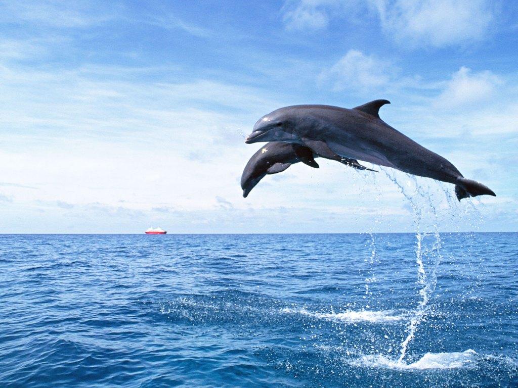 012 ryby - delfíni