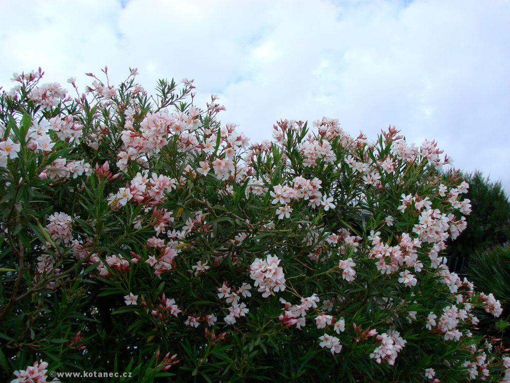 013 květiny flowers