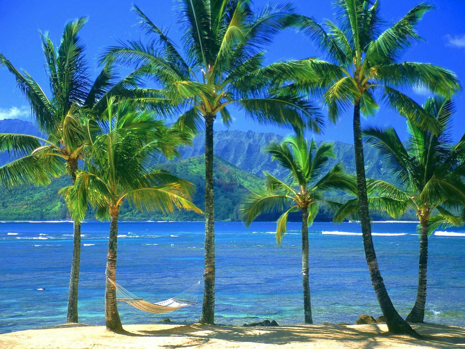 013 moře pláž palmy