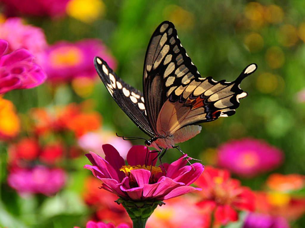 013 motýli - butterfly