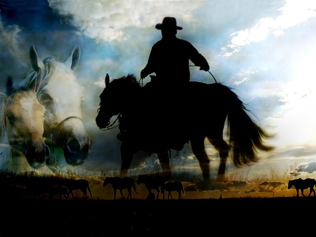 014 koně zvířata