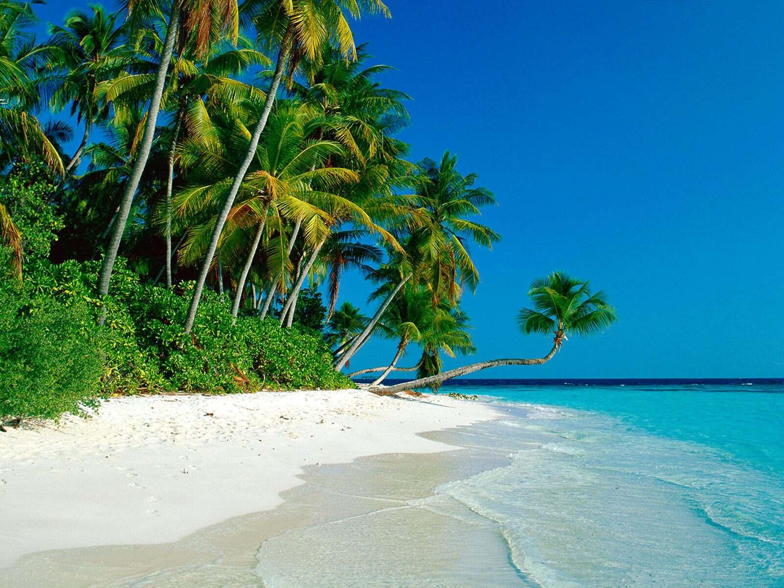 014 moře pláž palmy