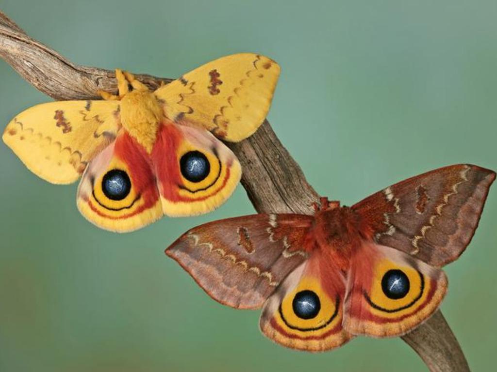 014 motýli - butterfly