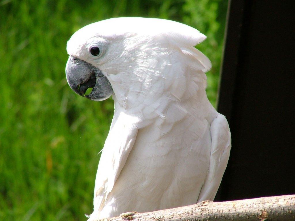 014 ptáci - papoušci - birds - parrots