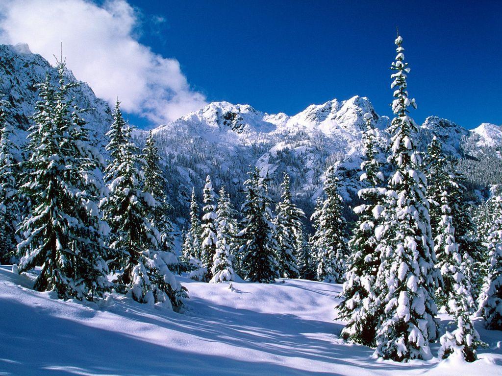 014 zimní krajina - winter landscape