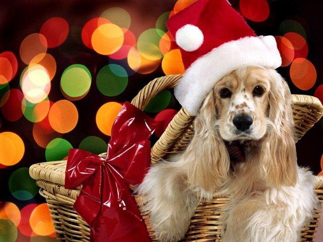015 Vánoční pohledy pohlednice Christmas