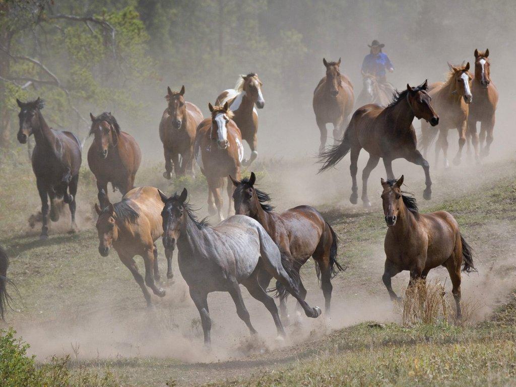 015 koně zvířata