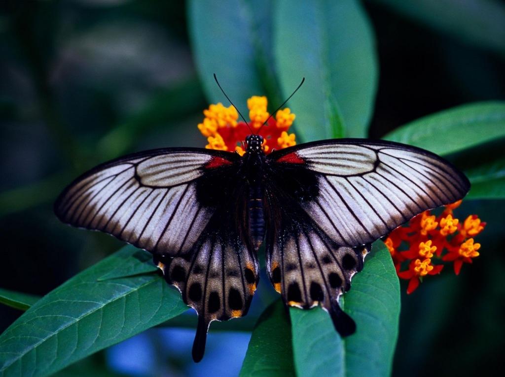 015 motýli - butterfly