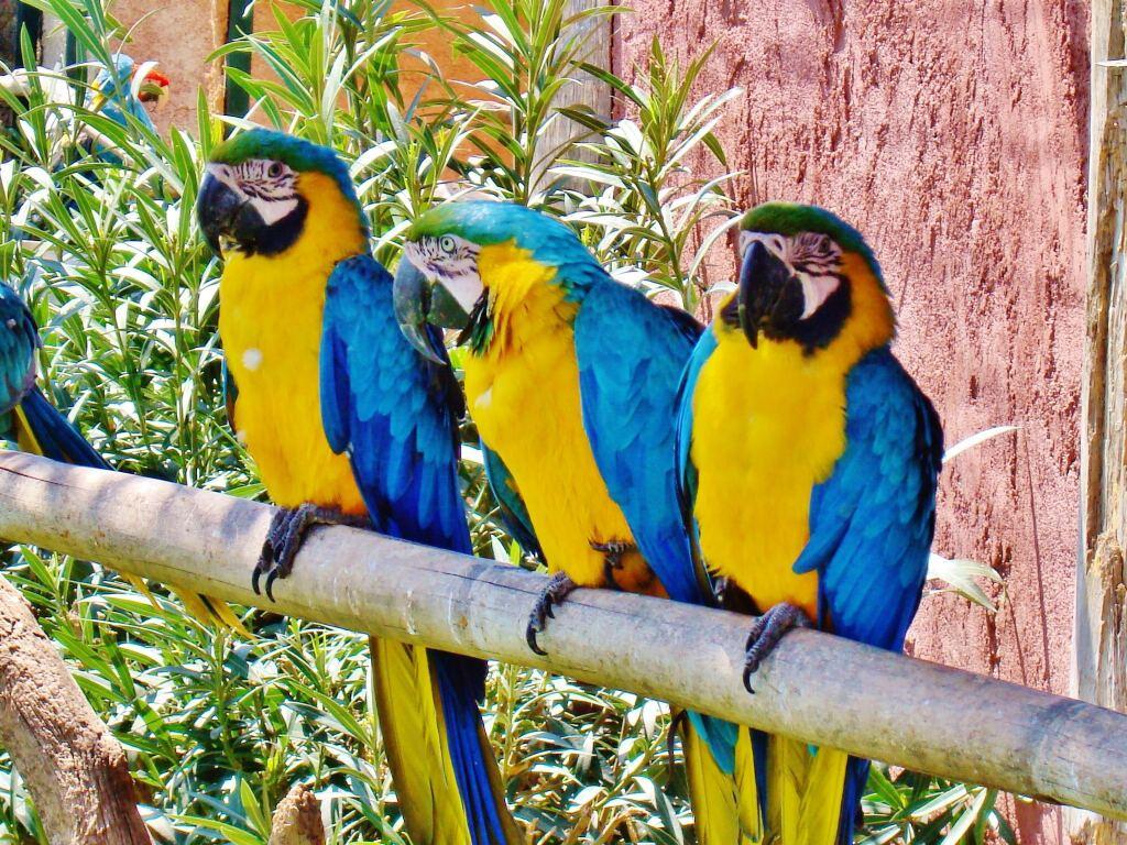 015 ptáci - papoušci - birds - parrots