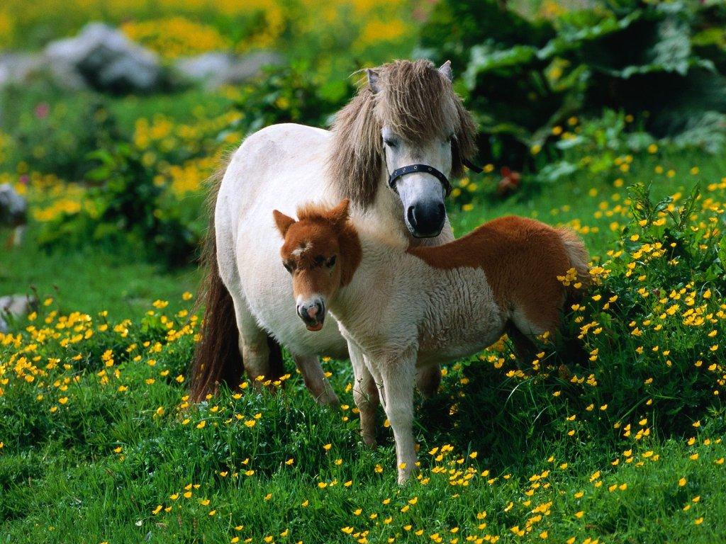 016 koně zvířata