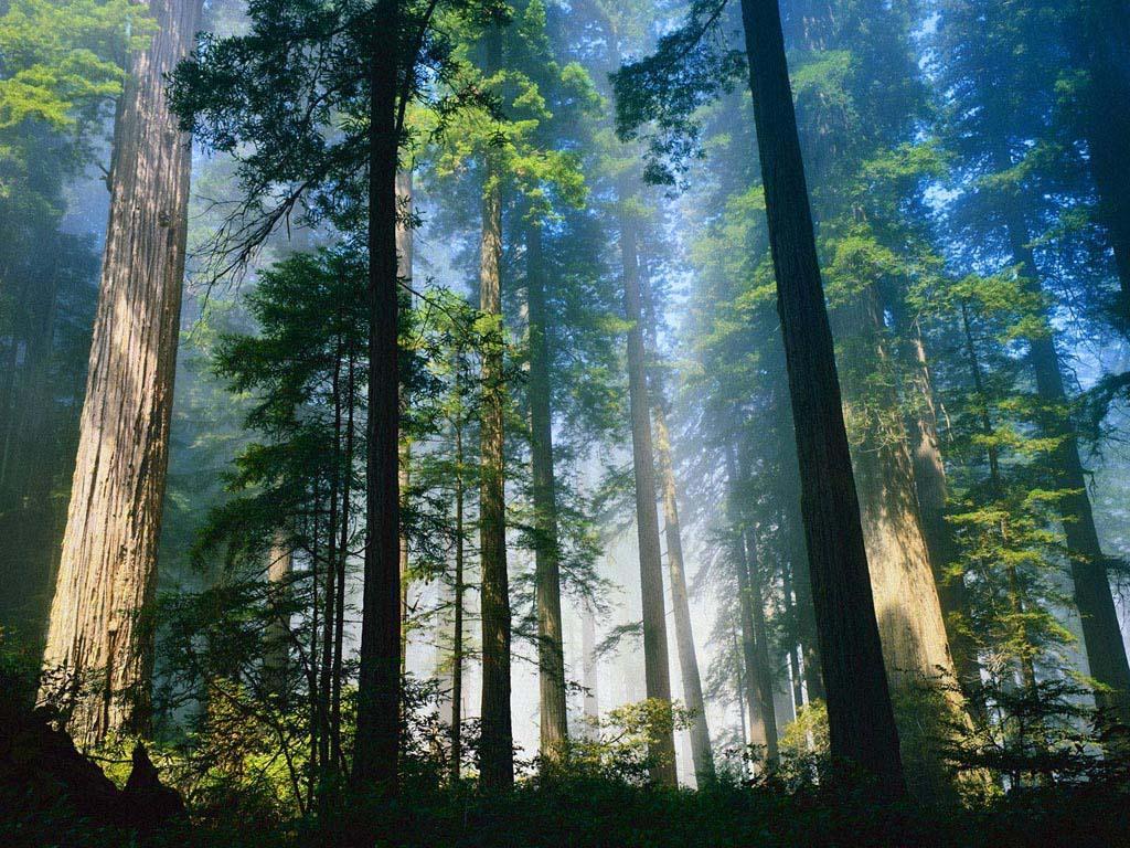 016 krajina - příroda - stromy - nature - landscape