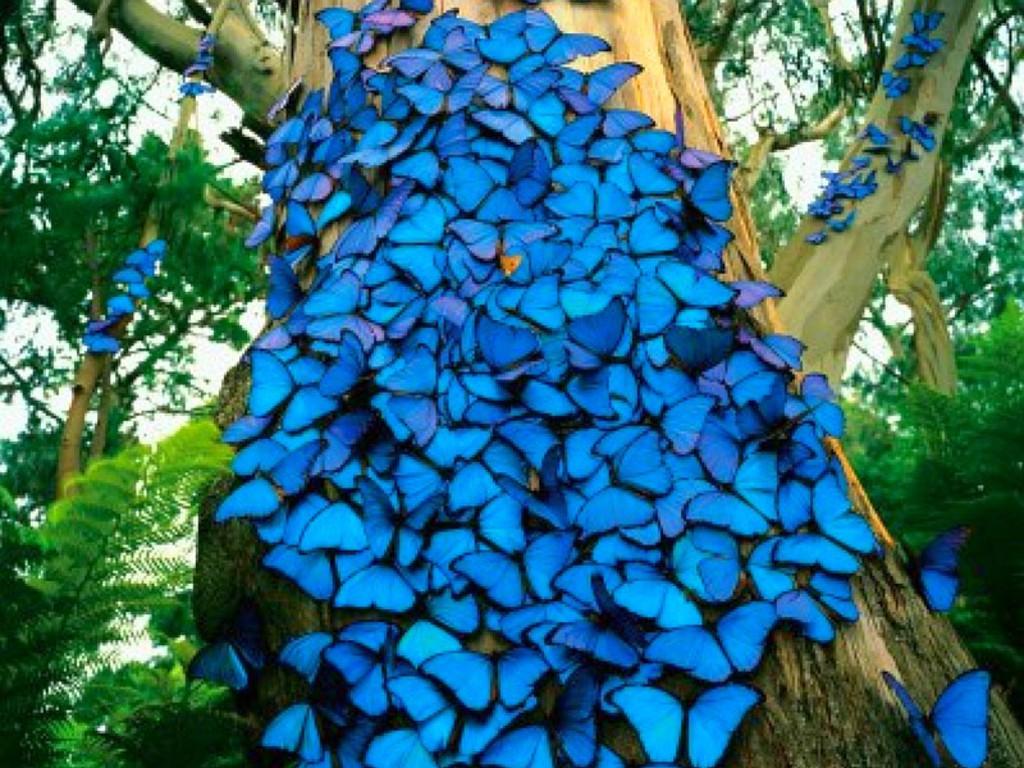 016 motýli - butterfly