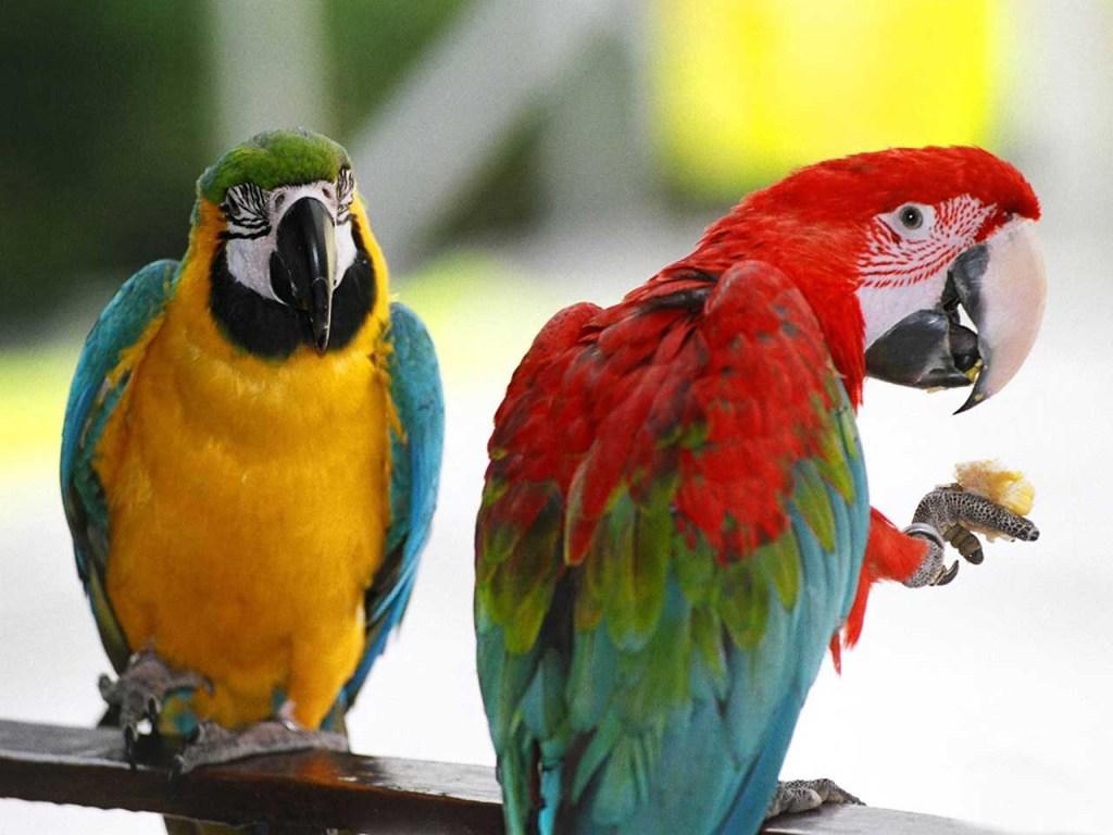 016 ptáci - papoušci - birds - parrots