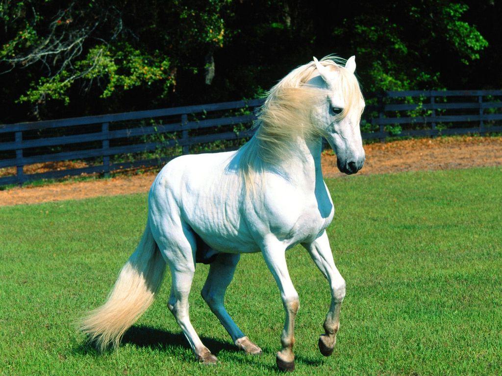 017 koně zvířata