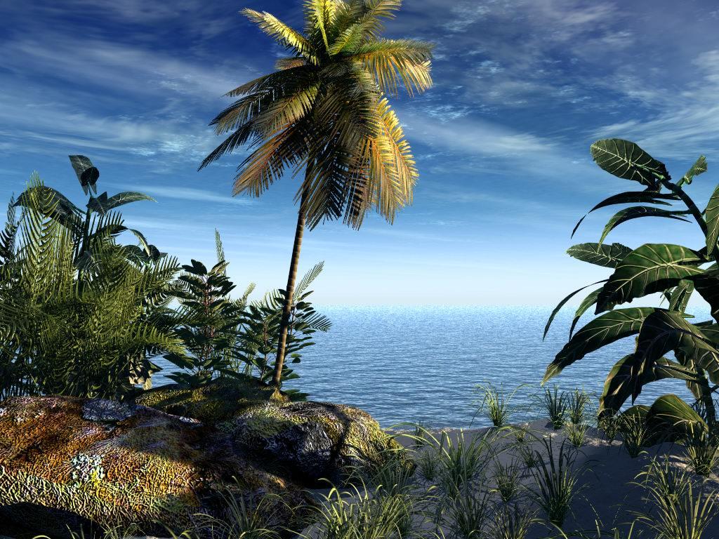 017 moře pláž palmy
