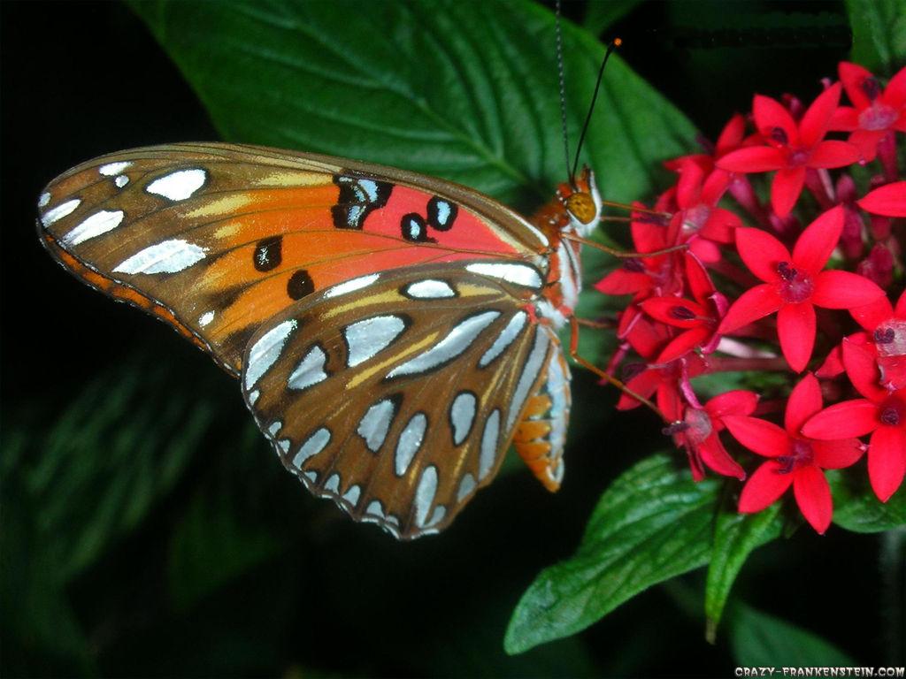 017 motýli - butterfly