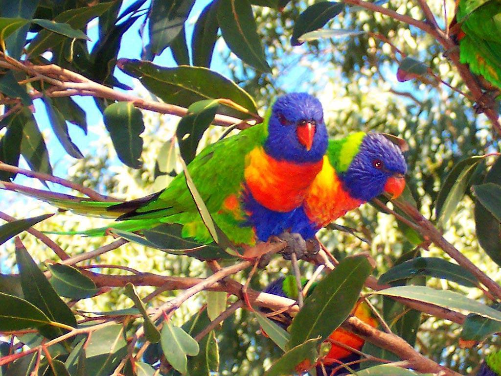 017 ptáci - papoušci - birds - parrots