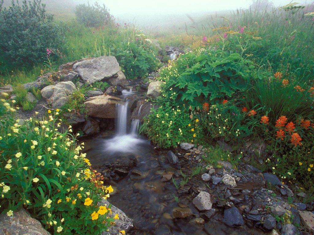 018 National Park Washington
