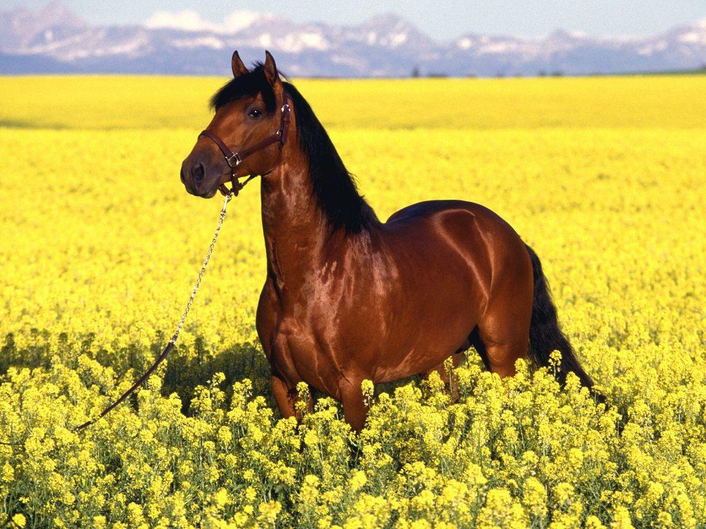 018 koně zvířata