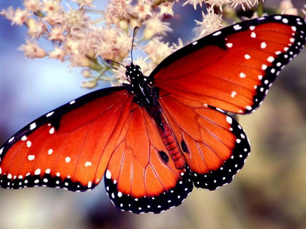 018 motýli - butterfly