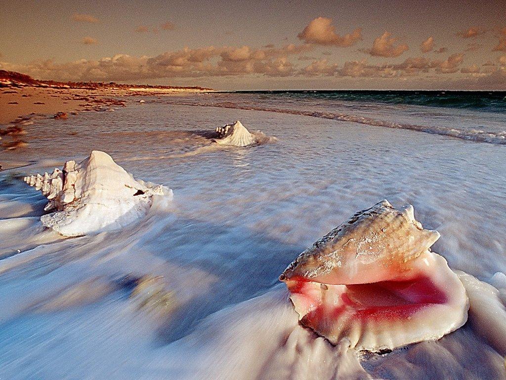 018 ryby - lastury