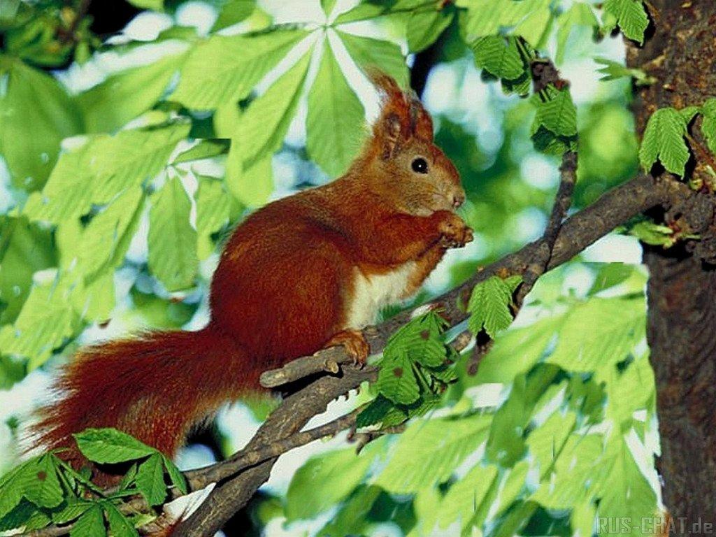 019 - veverky - zvířata