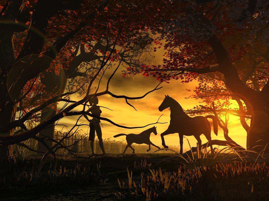 019 koně zvířata