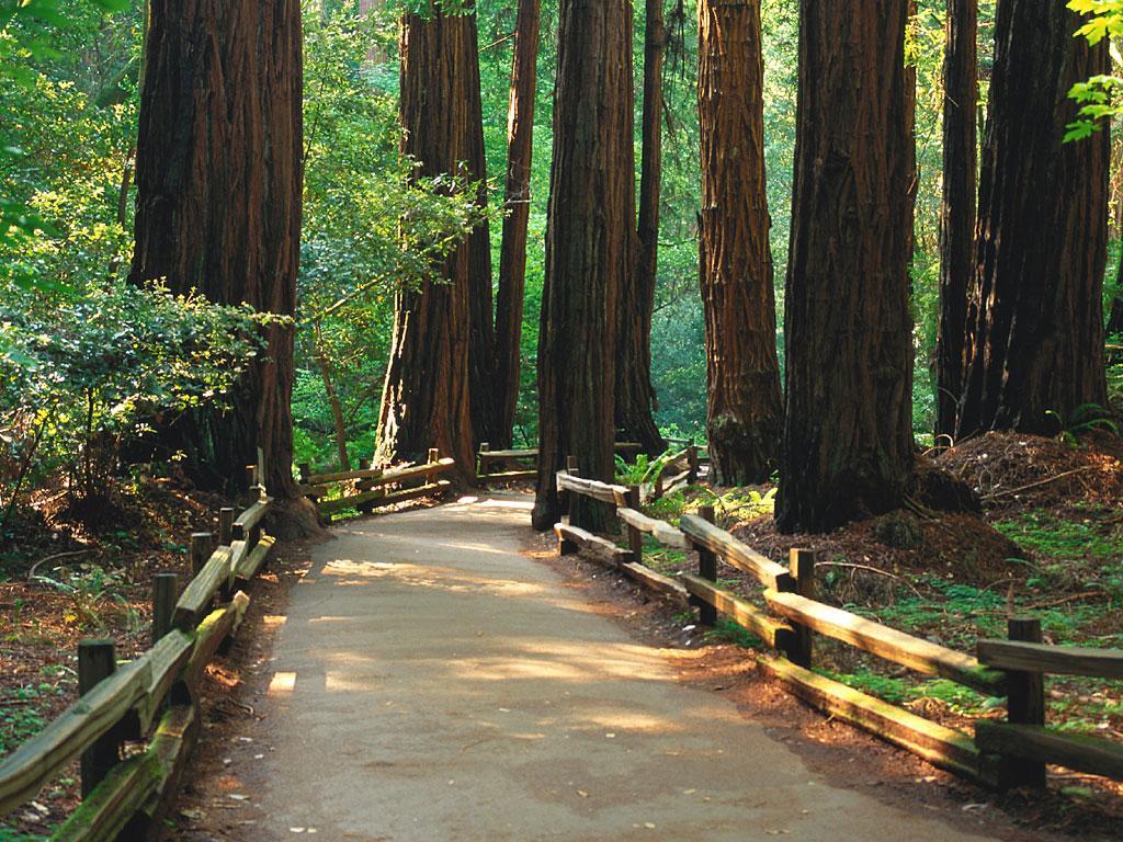 019 krajina - příroda - lesní cesta - nature