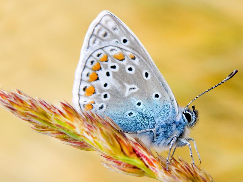 019 motýli - butterfly