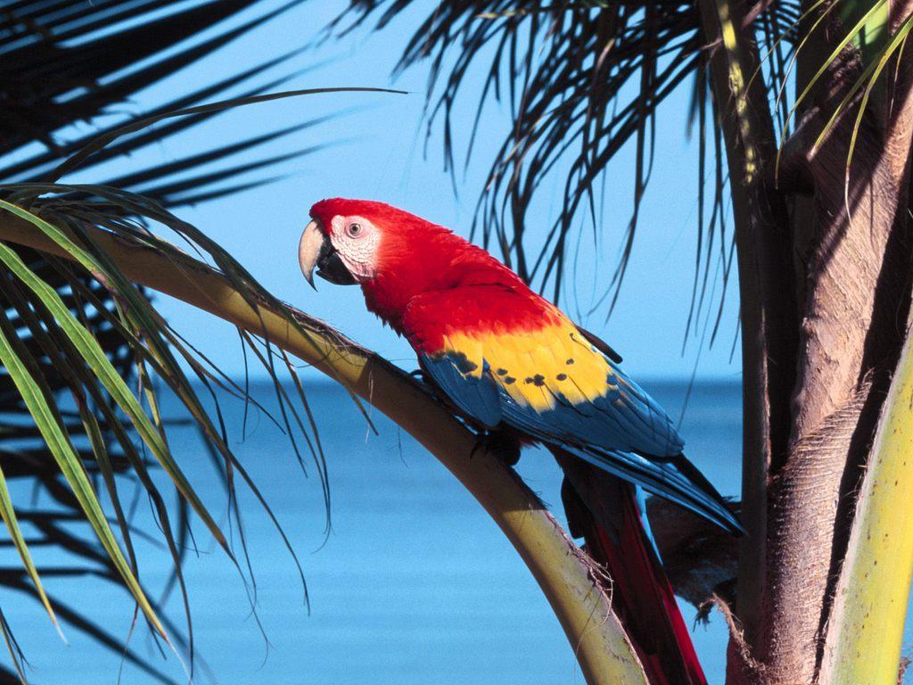 019 ptáci - papoušci - birds - parrots
