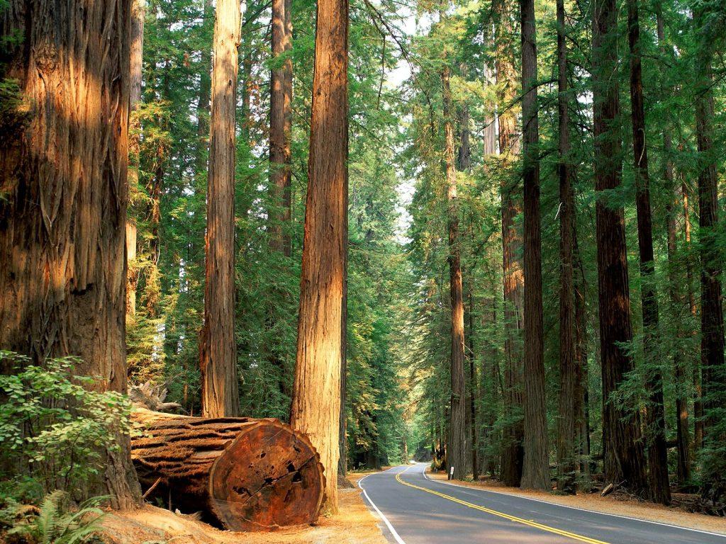 020 Redwood State Park California