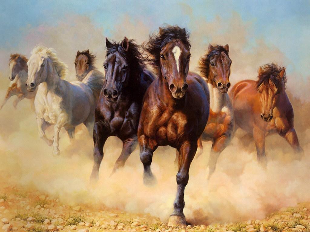 020 koně zvířata