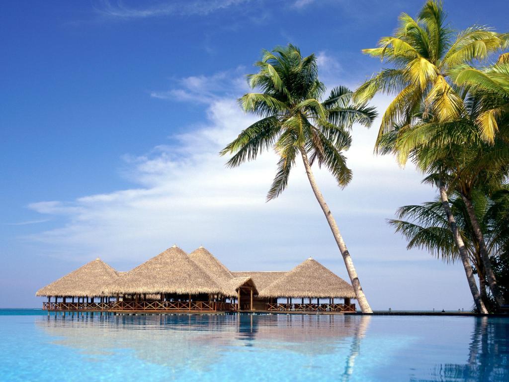 020 moře pláž palmy