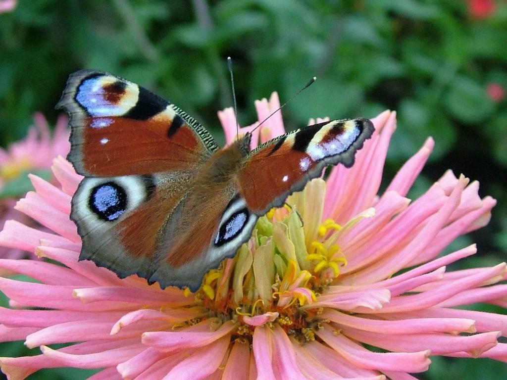 020 motýli - butterfly