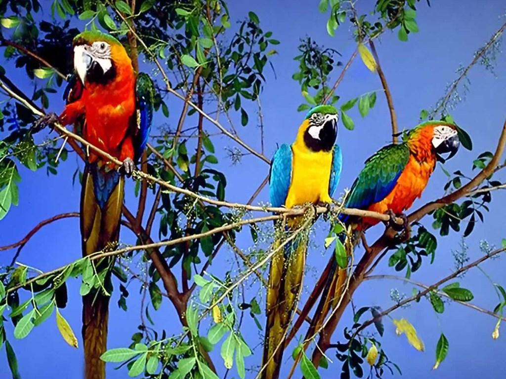 020 ptáci - papoušci - birds - parrots