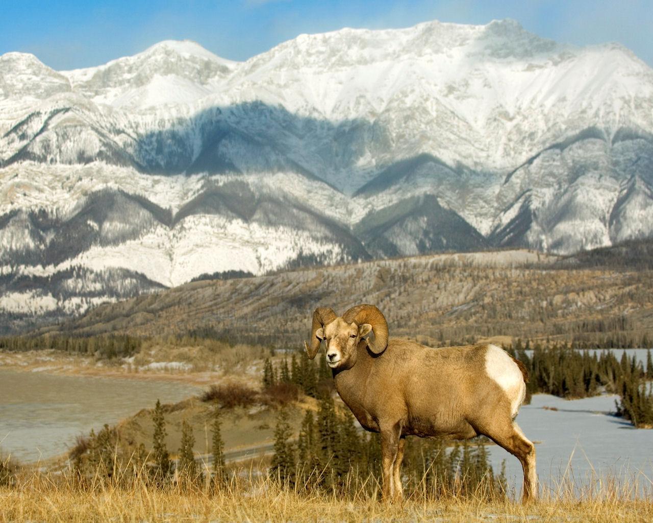 021 Alberta Canada