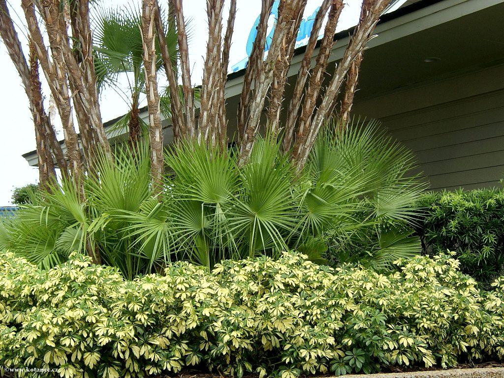 021 Orlando Florida