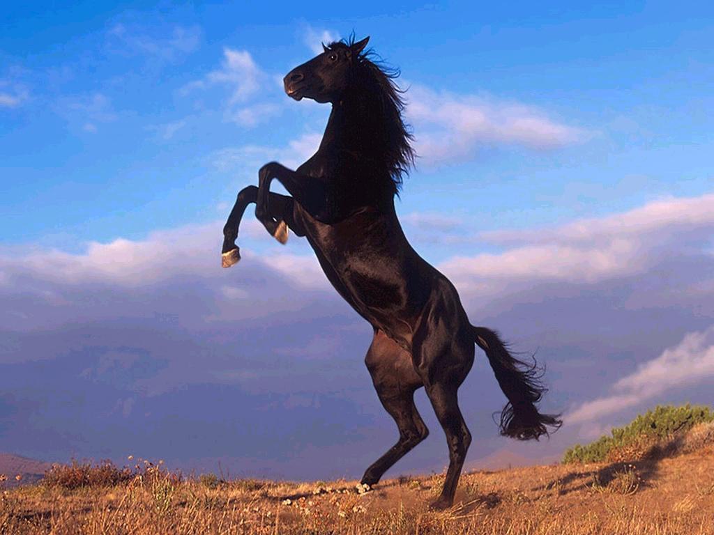 021 koně zvířata