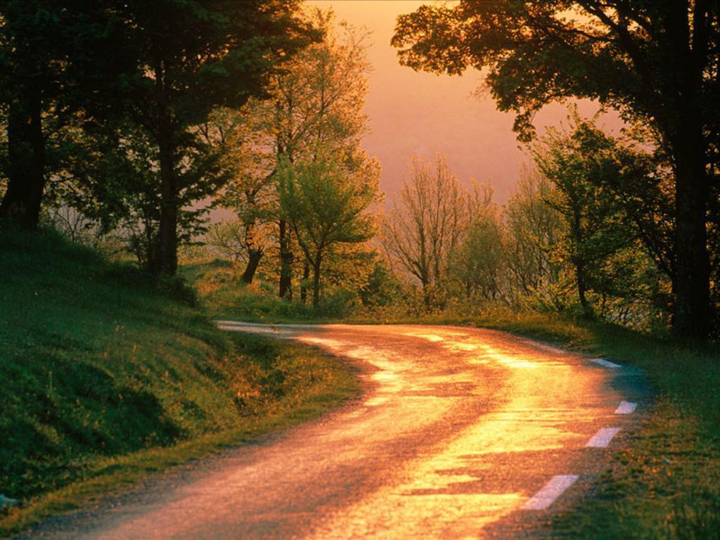 021 krajina - příroda - lesní cesta - nature