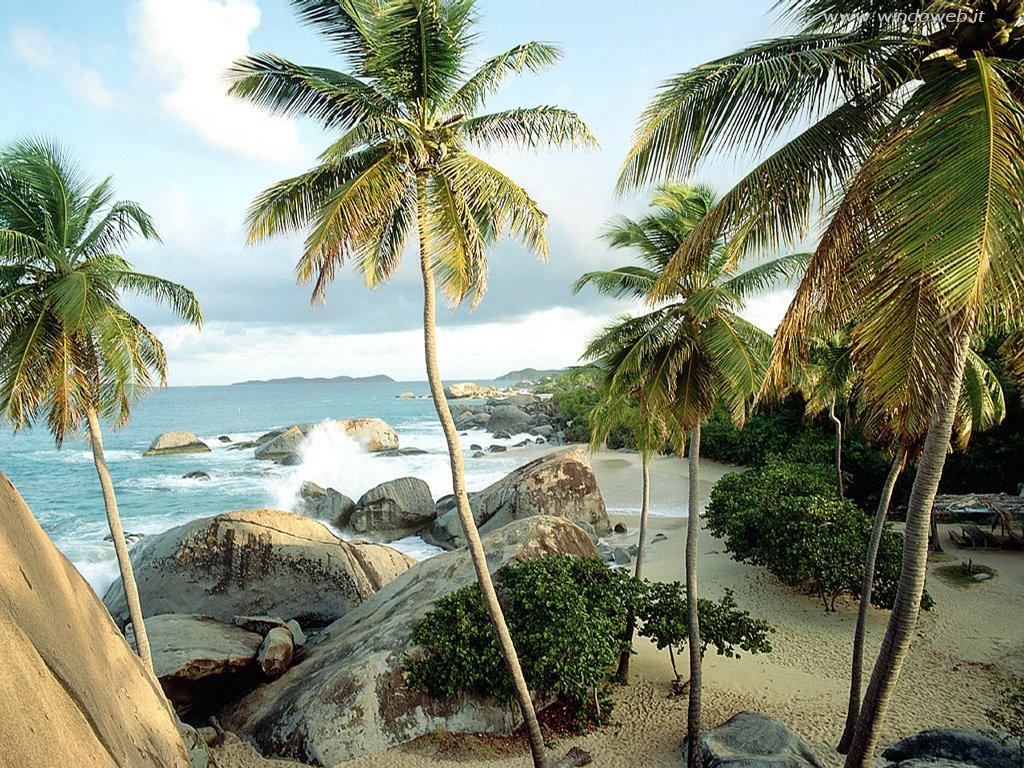 021 moře pláž palmy
