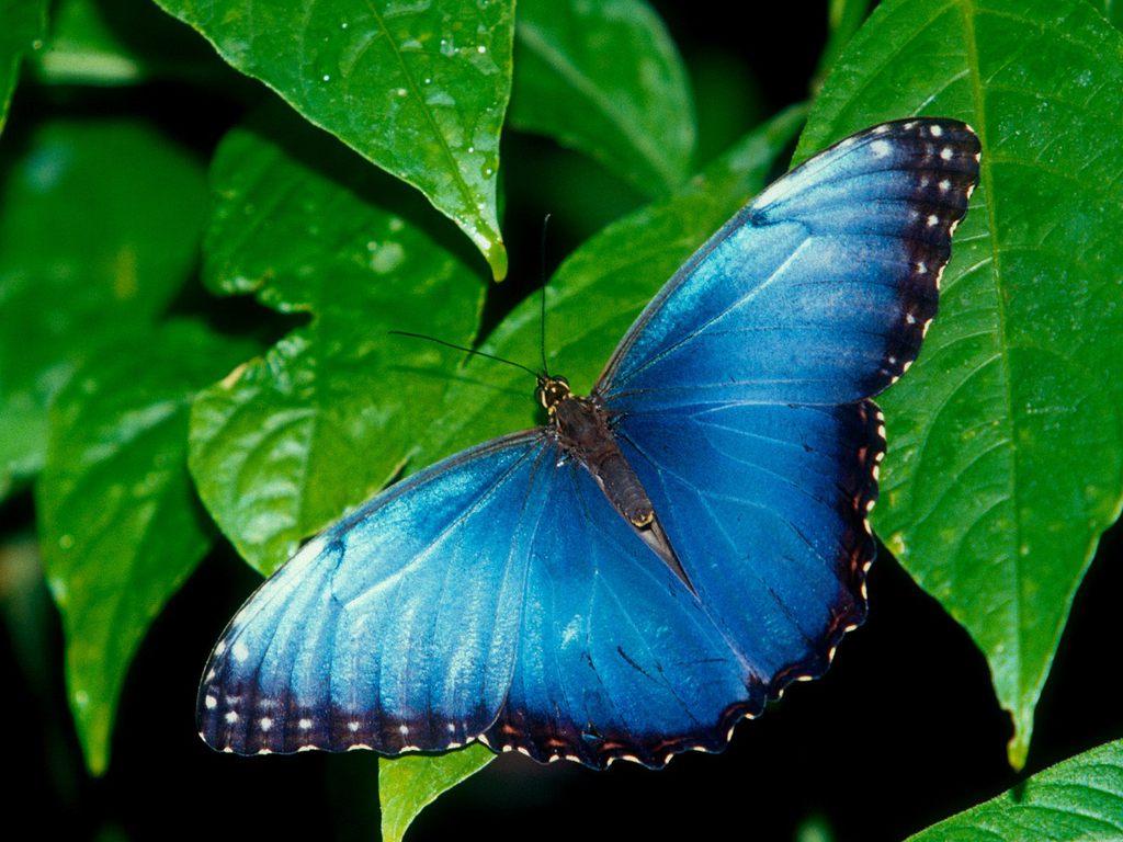 021 motýli - butterfly