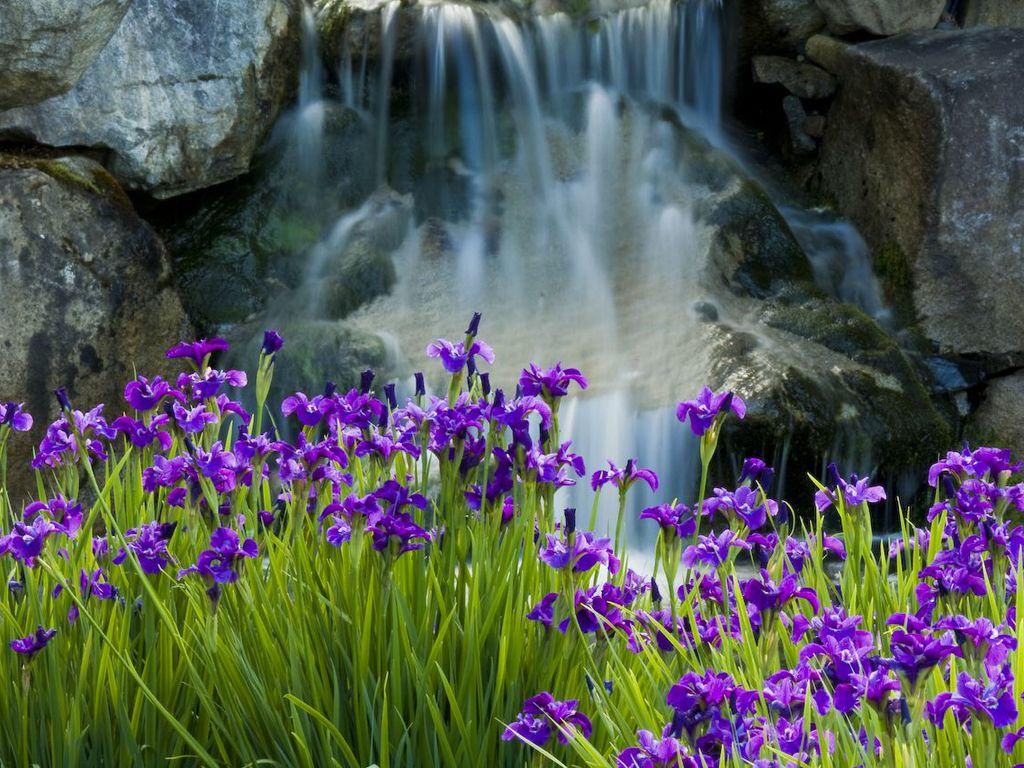 021 parky zahrady květiny