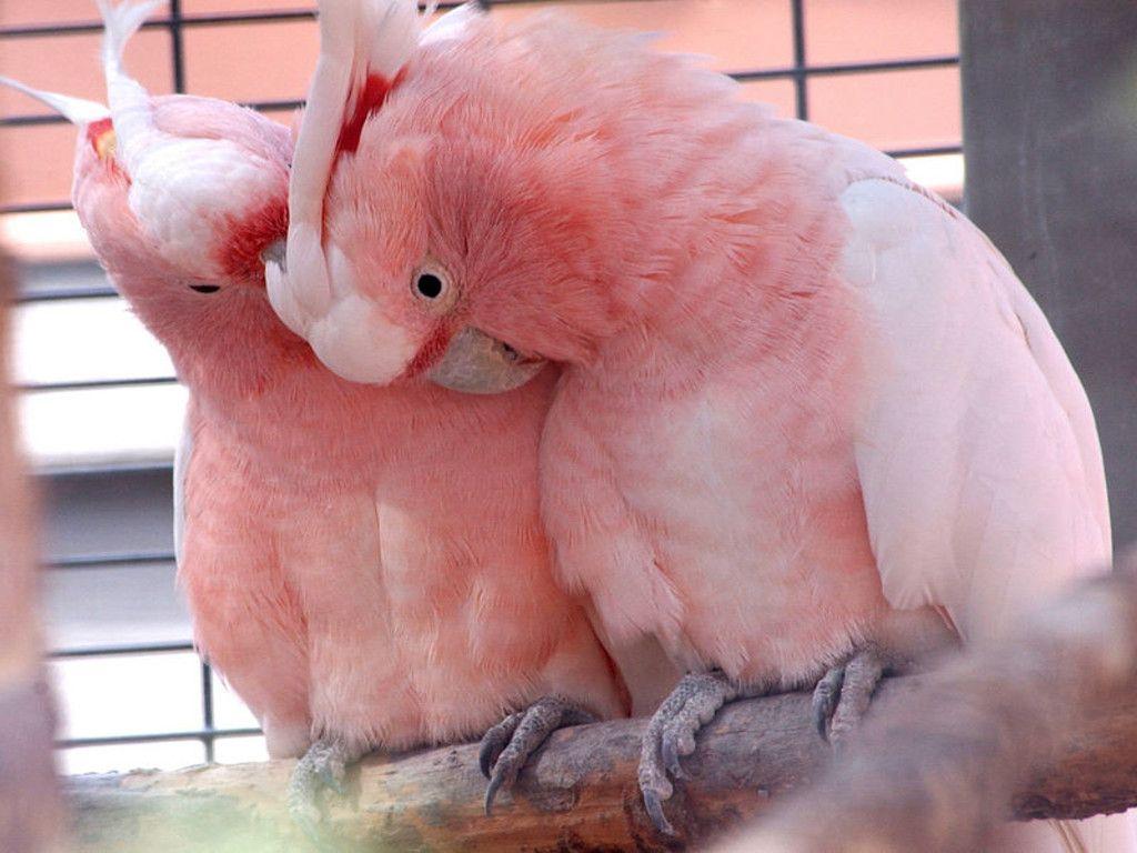 021 ptáci - papoušci - birds - parrots