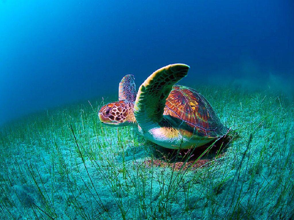 021 ryby - mořská želva