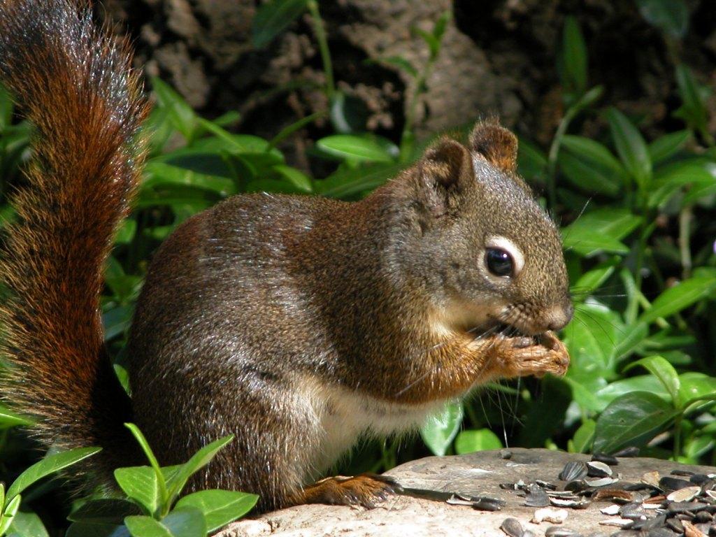 022 - veverky - zvířata